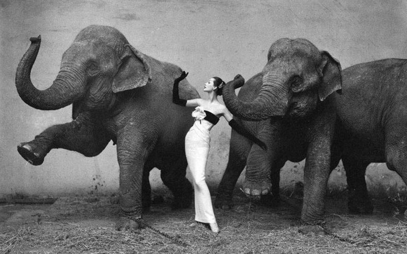 Richard-Avedon-Dovima-with-Elephants1955